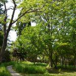 一本杉修道院の庭